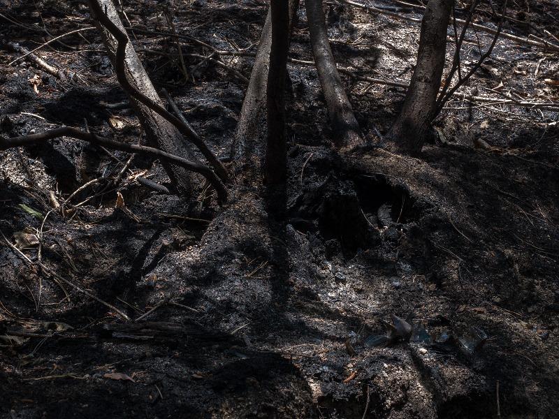 시작의 불 - forest #01, pigment print, 140x185, 2019.jpg